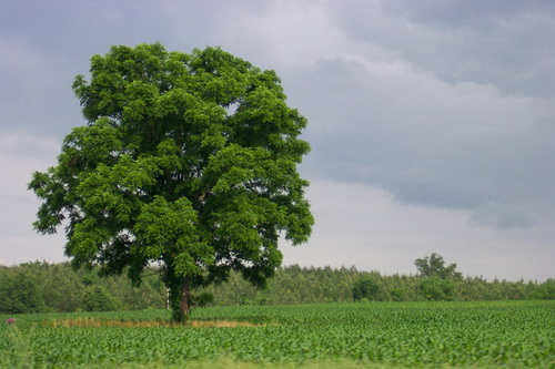 """Ne voir que l'arbre qui cache la forêt"""" - Preserver Sa Vue"""