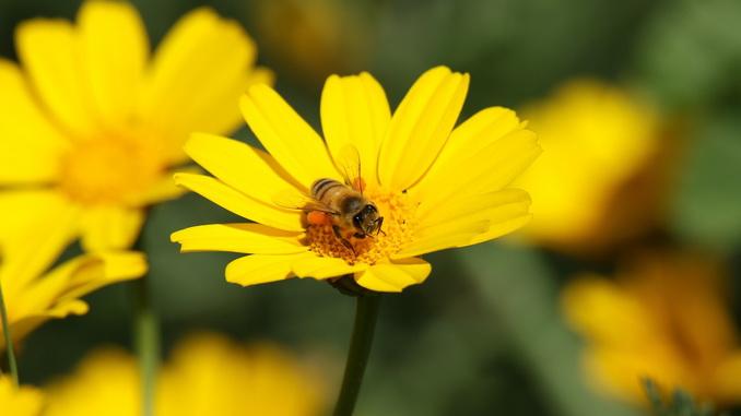 La vue des abeilles.